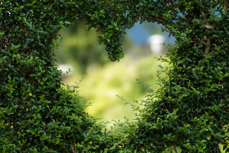 expat-nest-birthday-greener-lifestyle